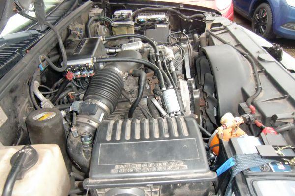 cimg5095E45AFA19-B144-B163-247A-D1793DC661A1.jpg